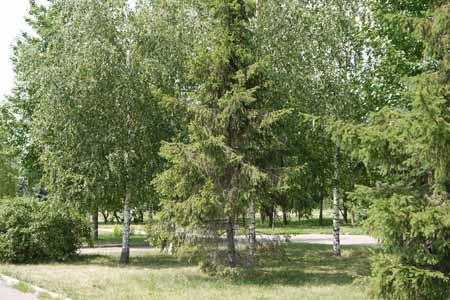 http://humanclub.ru/foto/2011/G2/1/P1000326.jpg