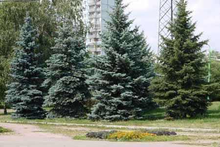 http://humanclub.ru/foto/2011/G2/1/P1000337.jpg