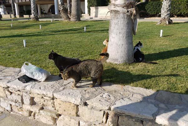 http://humanclub.ru/foto/2012/kypr/2/P1010984.jpg