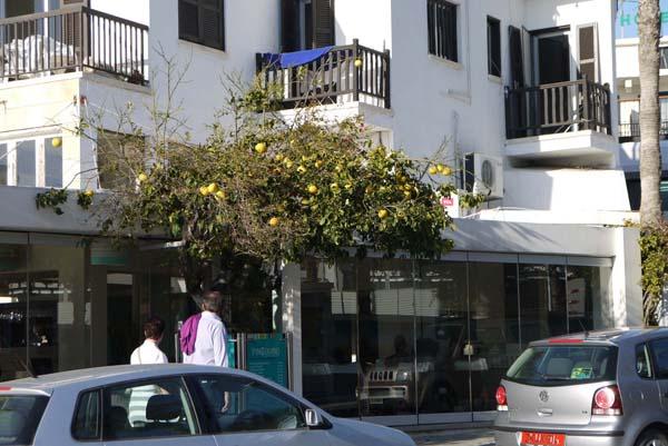 http://humanclub.ru/foto/2012/kypr/2/P1020007.jpg
